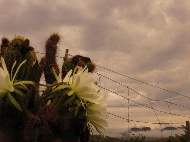 Rainflowers by Helena Doe