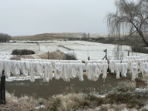 Wool is hung out to dry after being spun and washed at Weltevreden a nearby farm.
