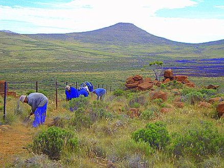 Fences are hard to maintain in the extremes of Karoo weather. Camps are huge.