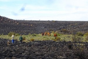 These cattle survived the fire on an unburned island.