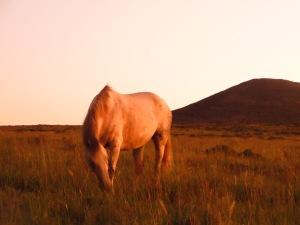 dream horses 1