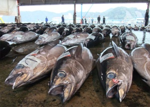 Japanese tuna auction