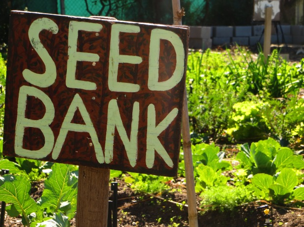 SEED Bank for hope