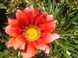 Photo by 9 year old Michaela.  Feeling what is alive in yourself and others is like looking at a flower.